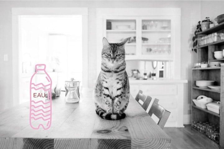 l'hydratation des chats