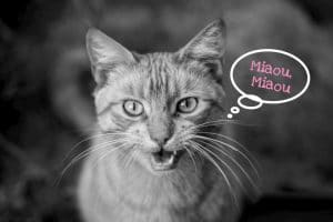 pourquoi votre chat miaule-t-il?