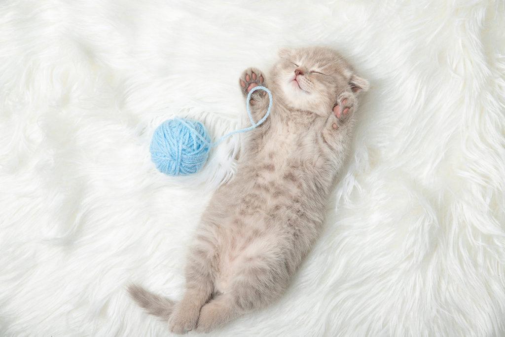 Avant d'accueillir un chaton chez soi, on fait une petite liste du nécessaire !