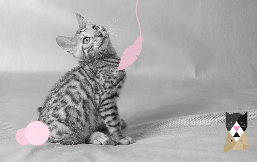 Comment accueillir un chaton à la maison ? 4 conseils