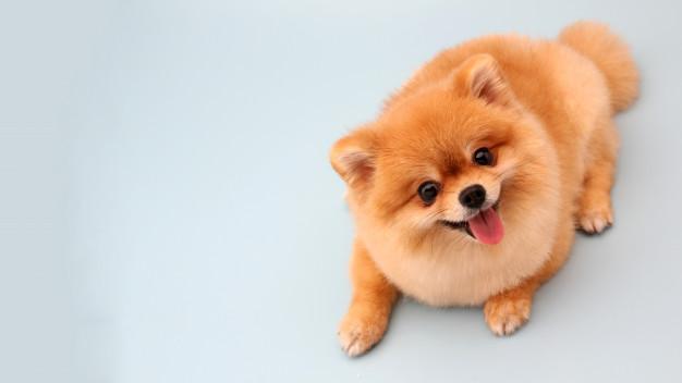 Quels aliments sont à éviter pour les chiens ?