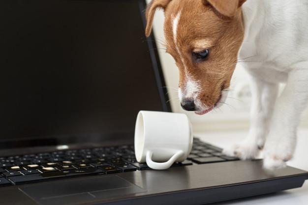 Les aliments toxiques pour les chiens : à proscrire de leur alimentation