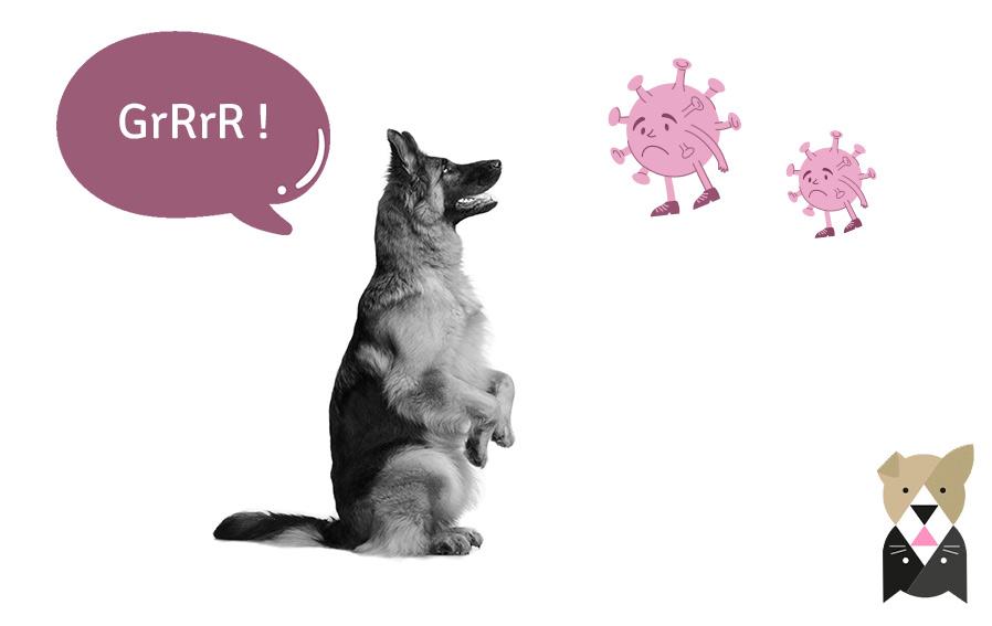 On vous dit tout sur ces chiens entraînés à détecter la Covid-19