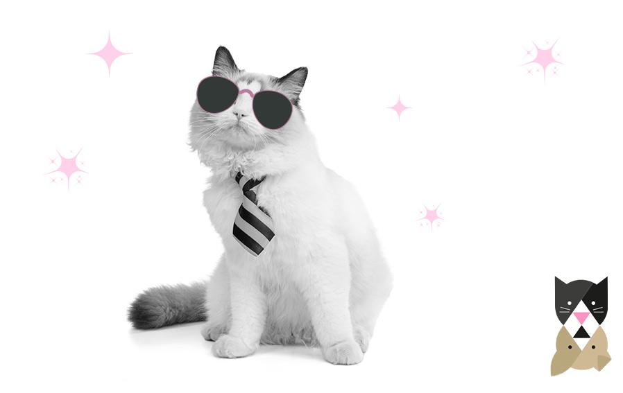 Top des races de chats les plus populaires – Partie 1