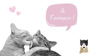 C'est la saison des amours chez les chats ! 5 choses à savoir