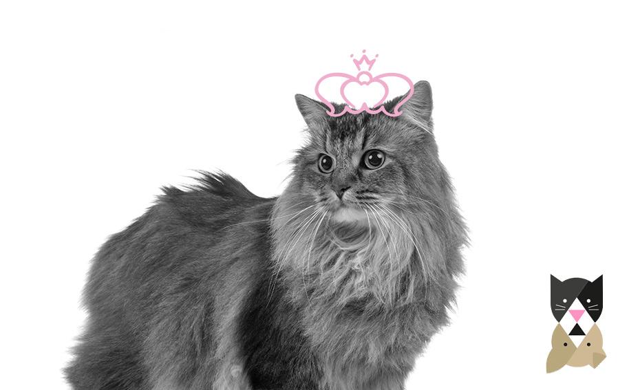 Top des races de chats les plus populaires – Partie 2