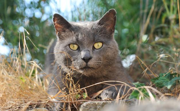 7. Le chat des Chartreux, notre célébrité locale