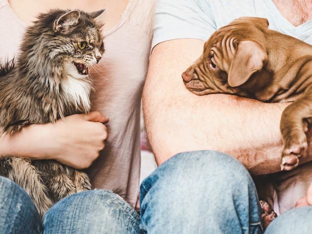 Le chat et le chien : deux animaux bien différents