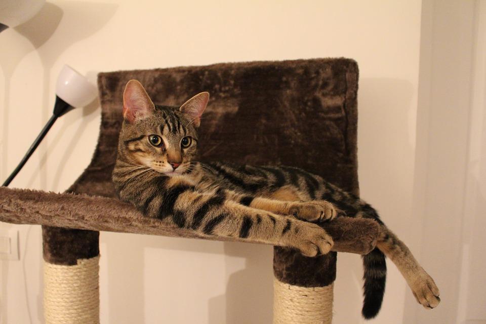 Pour une bonne cohabitation chat et chien, donnez-leur chacun leur propre espace
