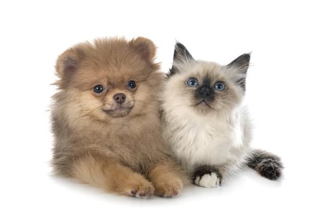 Une bonne cohabitation chat et chien commence idéalement tôt