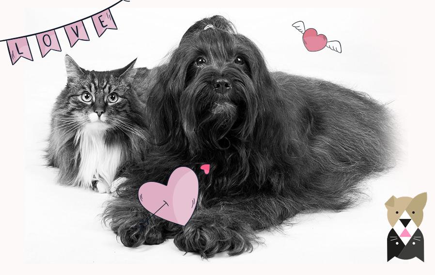 3 choses à savoir pour une bonne cohabitation entre chat et chien